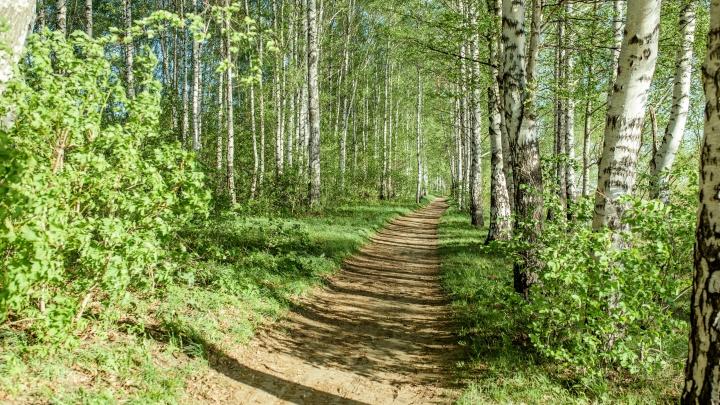 Власти запретили жителям ходить в лес. Нарушители заплатят большой штраф