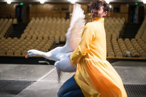 Главную роль в спектакле сыгралМаратМударисов, а гусыню — настоящая гусыня по имени Грета