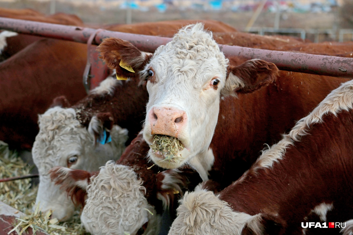 Молоко тоже теперь можно продавать соседям