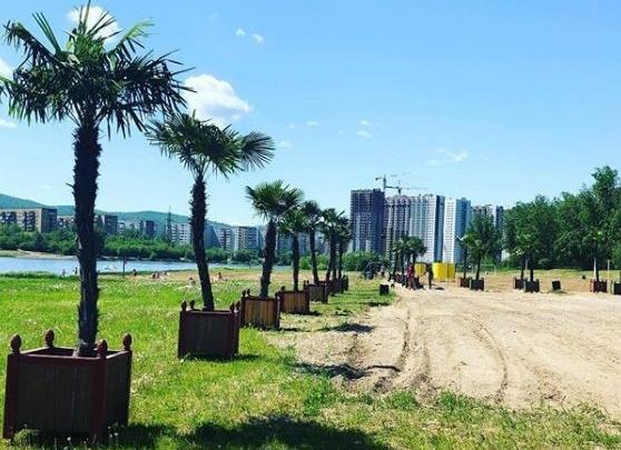 Пляж с пальмами в Красноярске открыли без проверки на бактерии