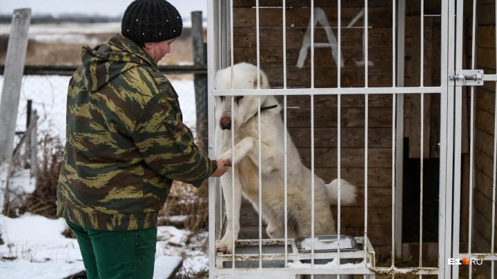 Приют для собак-гигантов: как в Екатеринбурге спасают алабаев и догов, которых предали хозяева