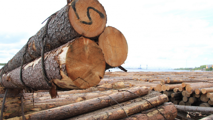 Продал за 11 миллионов: бывшего директора вельской фирмы осудили за хищение леса