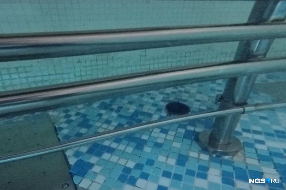 Так выглядят трубы лавочки под водой. Именно здесь застряла рука подростка
