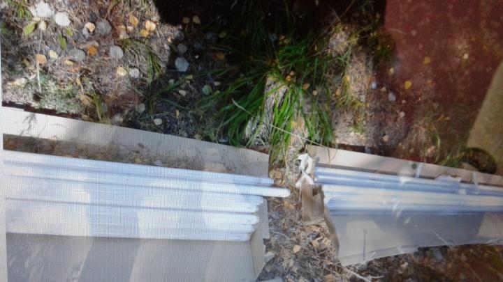 Тюменцы обнаружили рядом с зоной отдыха «Пруд Лесной» полсотни опасных ламп с ртутью