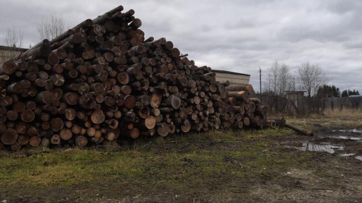 На лесобазе в Коноше девятилетнего мальчика насмерть придавило бревном