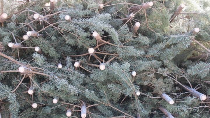 С 15 декабря в Кургане начнут продавать ёлки. Найдите ближайший базар на карте