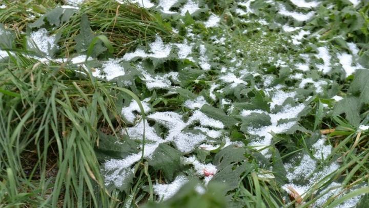 Вслед за ураганным ветром в Свердловскую область придут заморозки