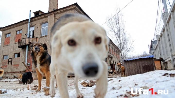 Жители Башкирии требуют наказать живодеров