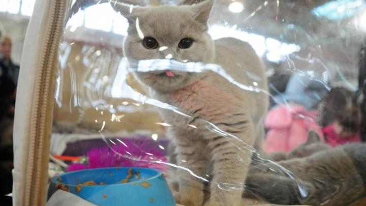 Толстеньких — в багаж: Минтранс отказался менять правила авиаперевозки животных