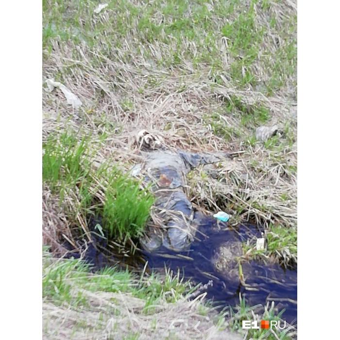 Следователи начали проверку после того, как участники «Майской велопрогулки» нашли скелет человека