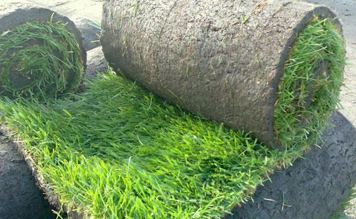 На границе в Челябинской области задержали 20 тонн рулонного газона из Самары