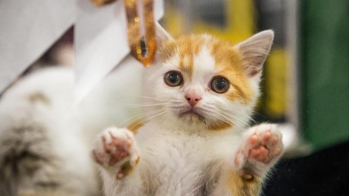 Вы просто космос: репортаж с умилительной выставки котиков
