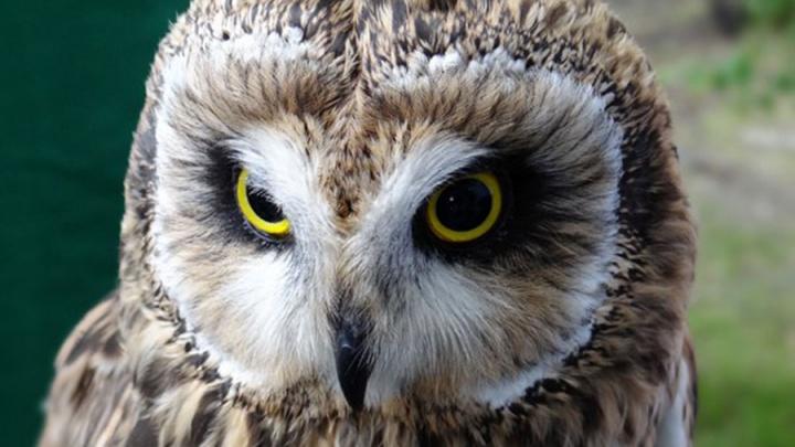 Как в «Гарри Поттере»: знакомство с совами и ещё 15 добрых событий выходных
