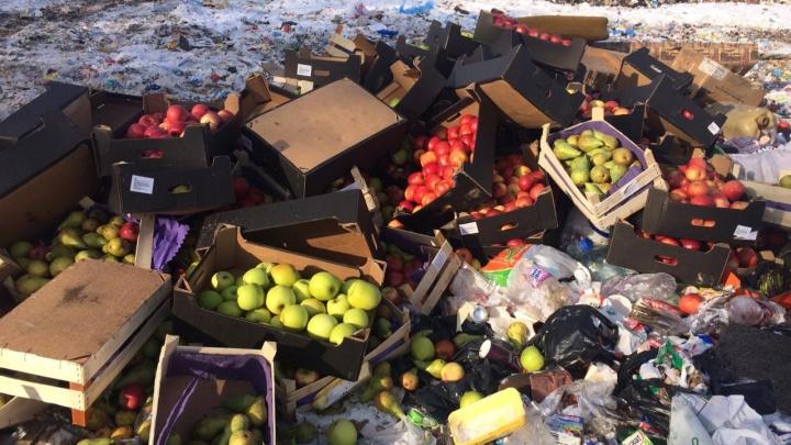 В Кургане уничтожили тонну санкционных груш и яблок