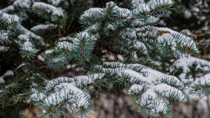 Мокрый снег и дождь: МЧС продлило предупреждение о заморозках в Прикамье