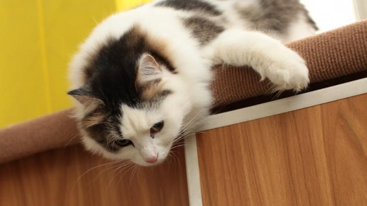 Своенравные, игривые и ласковые мурлыки Кургана в День кошек ищут новый дом