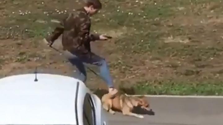«Мне очень сильно стыдно»: мужчина, который издевался над собакой в Уфе, записал извинения на видео