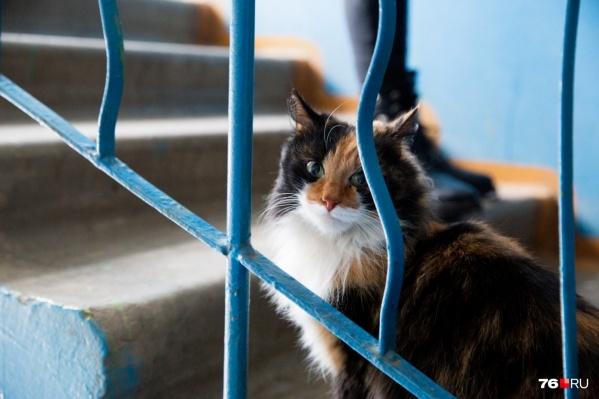Котик, которого искали хозяева, прятался на лестничной клетке