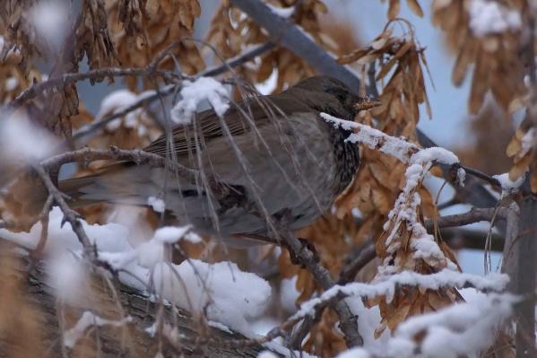 Обычно птицы улетают на юг