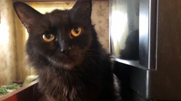 Ярославна, поселившая в однокомнатной квартире 50 кошек, рассказала, сколько на них тратит