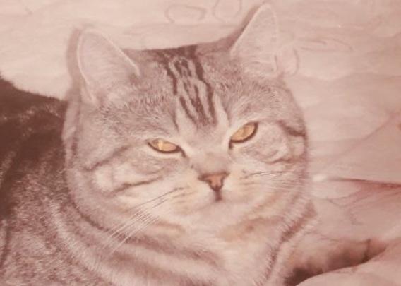 Серьезный косолапый кот объявился в семье спустя 7 лет после исчезновения