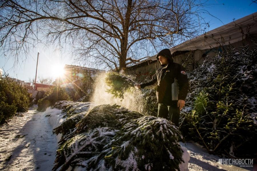 Новогодние елки уже приехали вНовосибирск