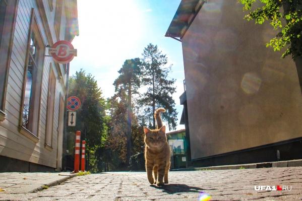 Привет от латвийского рыжика из Юрмалы
