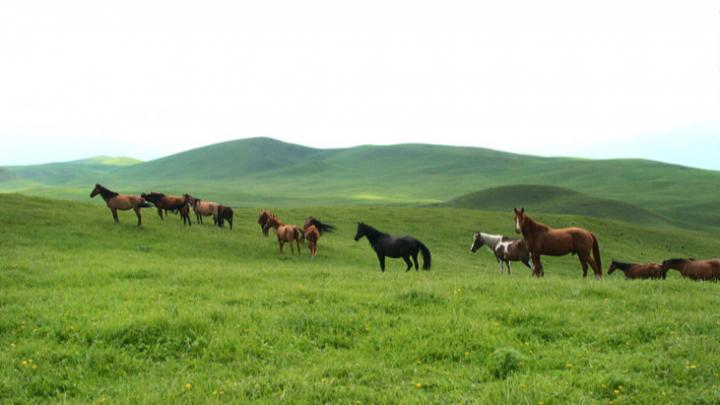 «Конь — это и друг, и транспорт, и еда»: приключение нижегородца в Казахстане