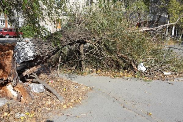 Волгоградцы сообщают о падающих деревьях из всех районов города
