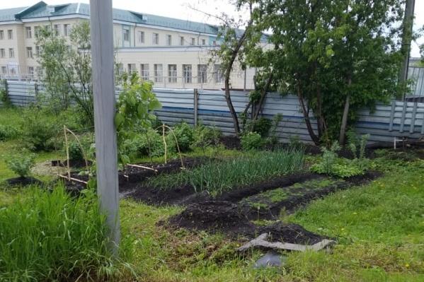 Пенсионер очистил территорию от мусора и посадил на ней кустарники и пару грядок