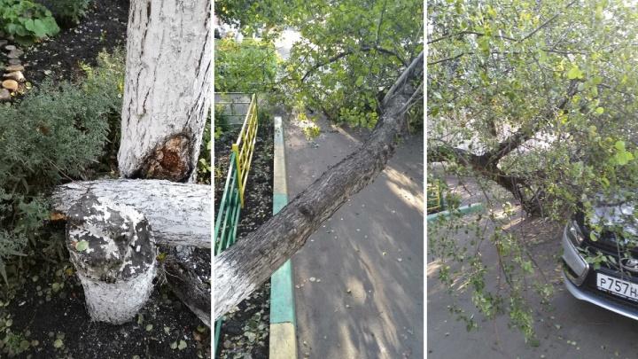 Дерево рухнуло на припаркованную по 60 Лет Октября «Ладу»