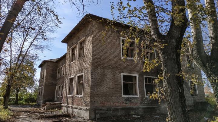 После убийства 11 щенков петардами в Башкирии возбудили уголовное дело