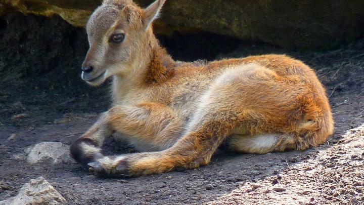 Большереченский зоопарк опубликовал снимки очередного новорождённого