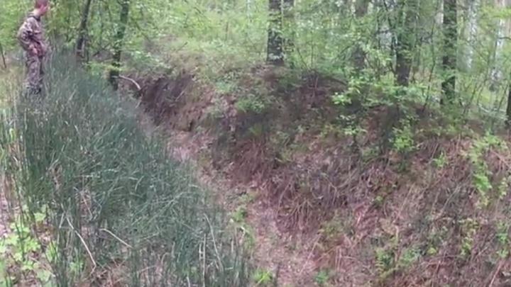 В Заельцовском бору нашли окопы с гильзами времён Первой мировой войны