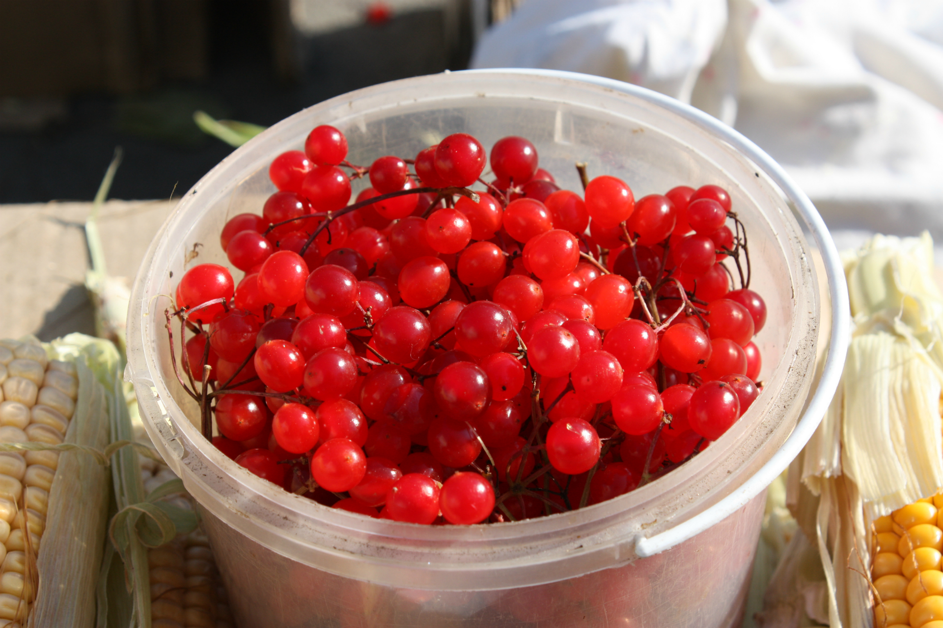 Калина по своему виду похожа на красную смородину, покупатели часто путают эти ягоды. А вот по вкусу горьковатую от кислой ягоды точно отличат
