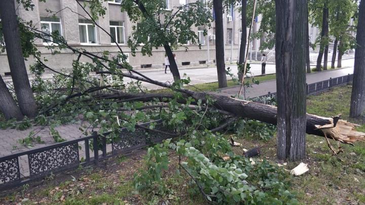 На проспекте Ленина рухнуло дерево, которое несколько дней нависало над тротуаром, где ходят люди