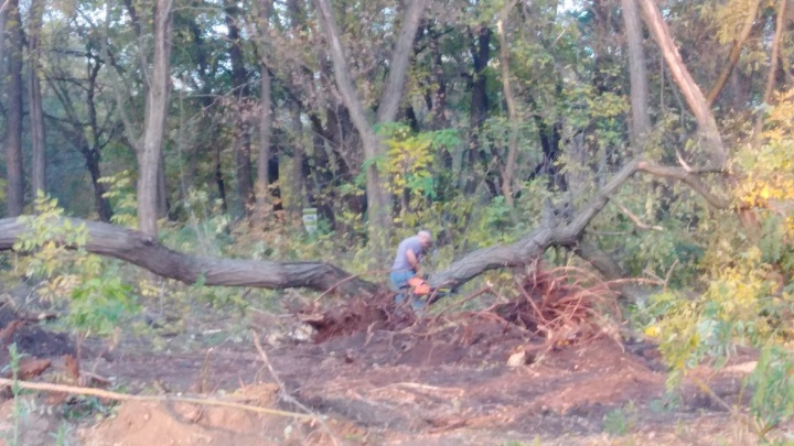 В Ростове в парке на Вересаева вырубили и сожгли деревья