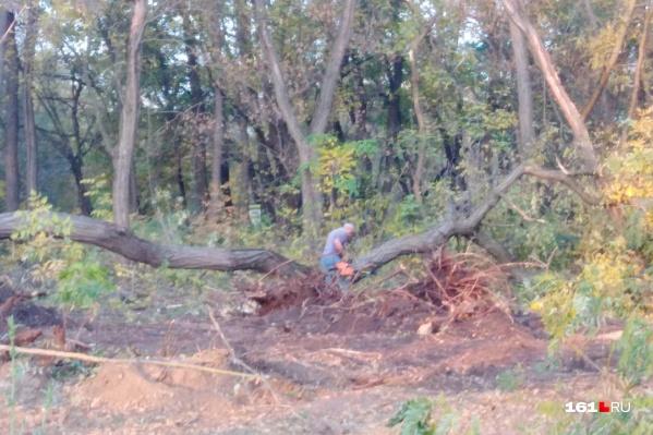 Общественники заявили, что в парке на Вересаева варварски уничтожают деревья