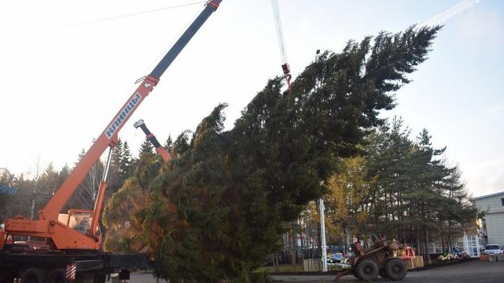 В Уфе появились первые новогодние елки