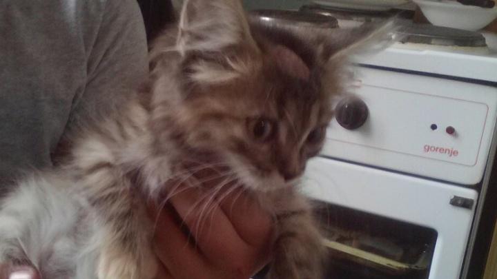 Соседка разрешила сломать стену: на Уралмаше спасали котёнка, который упал в шахту с 6-го этажа