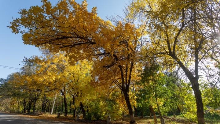 «Пасмурный октябрь осенней дышит стужей»: Волгоградской области обещают ветер, морось и-4 ºС