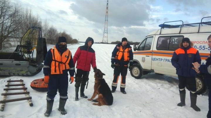 Хозяин не бросил попавшего в беду пса: в Ярославской области со льда Волги сняли мужчину с овчаркой