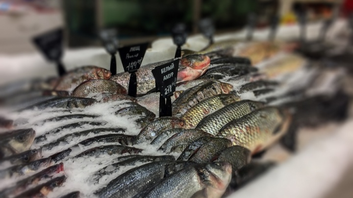 Червивой рыбы в Кургане не станет меньше, пока жители не начнут жаловаться в Роспотребнадзор