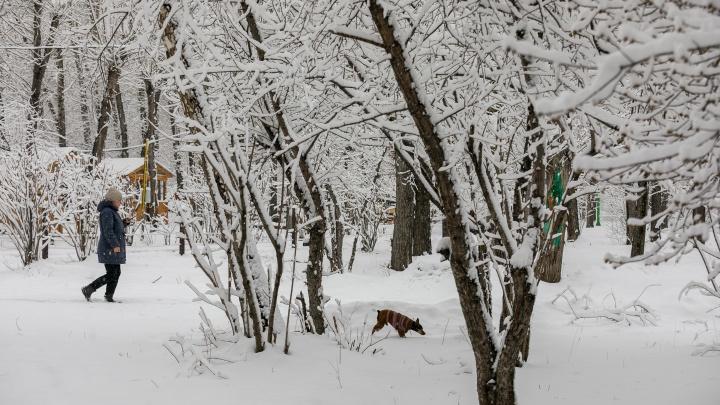 Завтра — пожары, через 30 лет — малярия: к чему ведет аномальное потепление в Красноярском крае