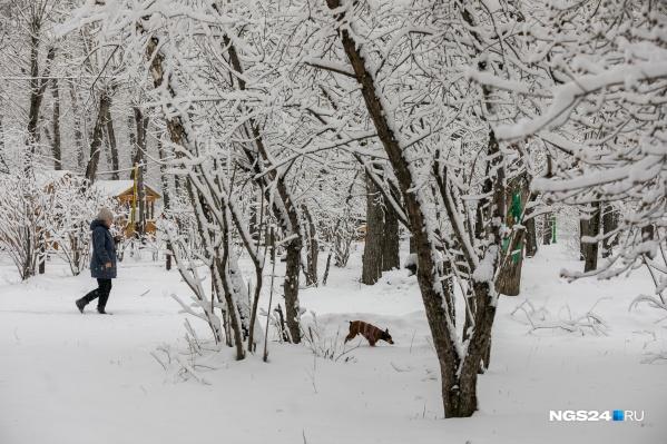 Прошедший январь трудно назвать снежным, но в отдельные дни было очень даже красиво