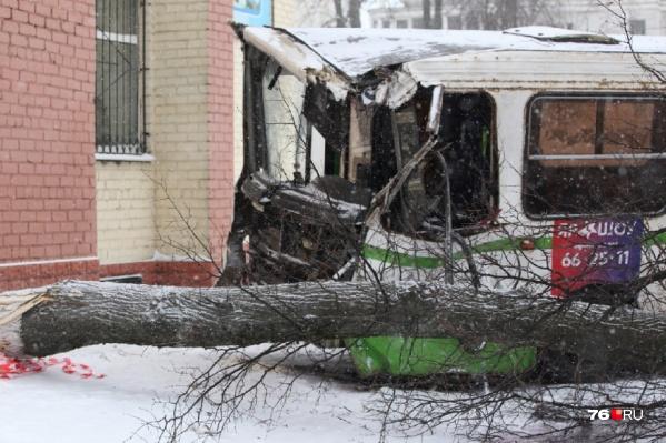Водитель так и не смог затормозить сам и врезался в дерево