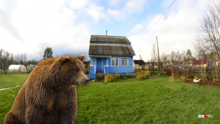 «Был в пяти метрах от крыльца»: в посёлке Уемском медведь задрал собаку