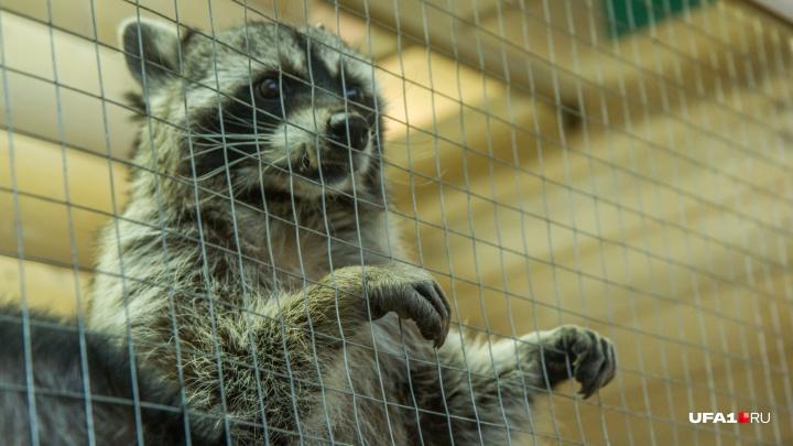 «Зоопарки, где люди сидят в клетке, — это честно»: эксперты и владельцы животных — о новом законе