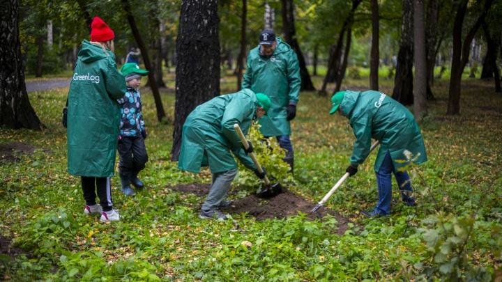 Неравнодушные новосибирцы высадили сотню новых деревьев в «Берёзовой роще»