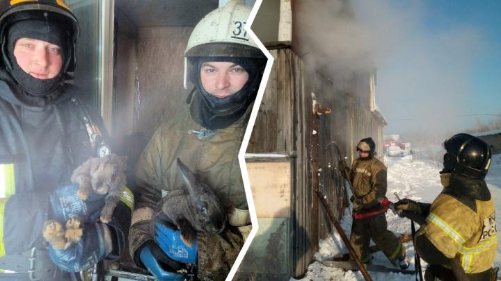 В Тобольске пожарные вынесли кроликов из горящего дома